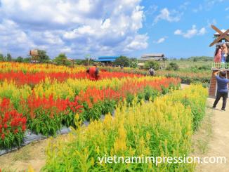 9 Destinasi Wisata Sangat Ikonik di Cần Thơ Vietnam